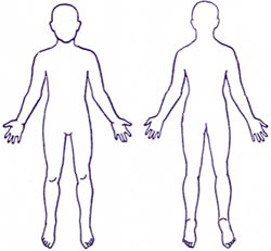 دانلود تحقیق و پاورپوینت کامل آناتومی بدن به همراه شرح